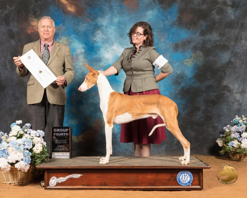 GDAB Great Danes & Ibizan Hounds - A little About Us